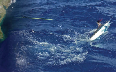 Mid-Atlantic Tournaments Offer Up World-Class Marlin Fishing